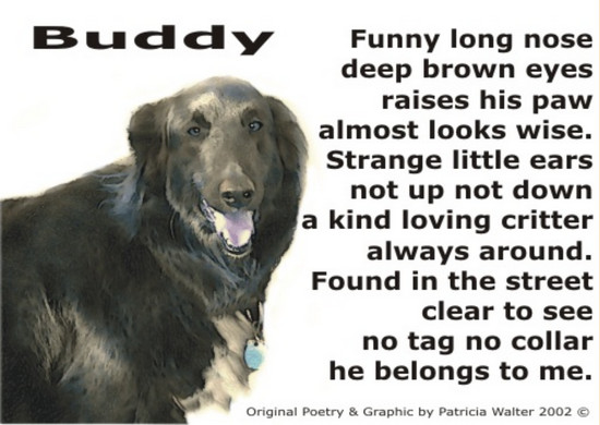 Buddy Funny long nose deep brown eyes raises his paw almost looks wise. Strange little ears not up not down a kind loving critter always around. Found in the street clear to see no tag, no collar he belongs to me. Poetry & Art by Patricia Walter 2002 ©