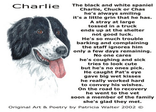 Charlie The black and white spaniel Charlie, Chuck or Chas he's always smiling it's a little grin that he has. A stray at large tossed in a truck ends up at the shelter not good luck. He's so much trouble barking and complaining the staff ignores him only a few days remaining. No one cares he's coughing and sick tries to look cute but he's no ones pick. He caught Pat's eye gave big we kisses he really worked hard to convey his wishes. On the road to recovery he went to the vet soon a member of the family she's glad they met. Poetry & Art by Patricia Walter 2002 ©