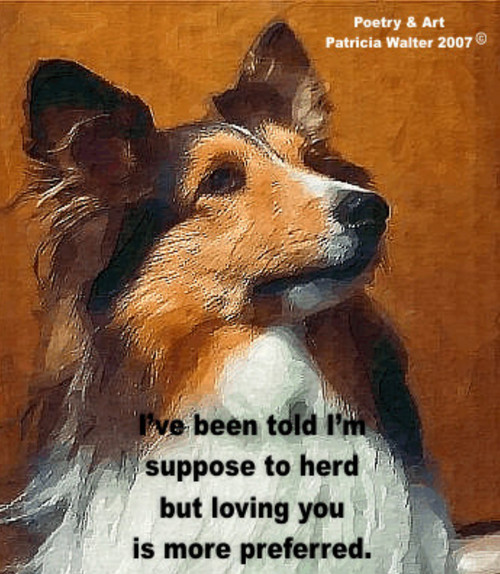 Collie I've been told I'm suppose to herd but loving you is more preferred. Poetry & Art by Patricia Walter 2007 ©