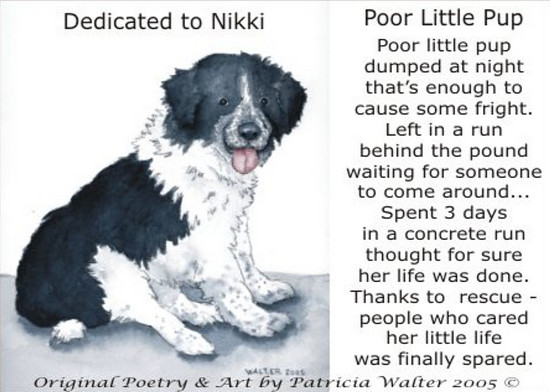 Poor Little Pup  Poor little pup dumped at night that's enough to cause some fright. Left in a run behind the pound waiting for someone to come around... Spent 3 days in a concrete run thought for sure her life was done. Thanks to rescue - people who cared her little life was finally spared.  Poetry & Photo by Patricia Walter 2005 ©