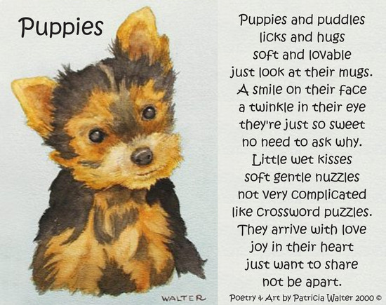 Puppies Puppies and puddles licks and hugs soft and lovable just look at their mugs. A smile on their face a twinkle in their eye they're just so sweet no need to ask why. Little wet kisses soft gentle nuzzles not very complicated like crossword puzzles. They arrive with love and joy in their heart just want to share not be apart. Poetry & Painting by Patricia Walter 2000 ©
