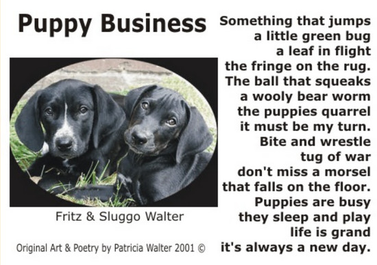 Puppy Business Something that jumps a little green bug a leaf in flight the fringe on the rug. The ball that squeaks a woolly bear worm the puppies quarrel it must be my turn. Bit and wrestle tug of war don't miss a morsel thqt falls on the floor. Puppies are busy they sleep and play life is grand it's always a new day. Poetry & Art by Patricia Walter 2001 ©