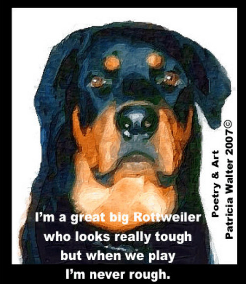 I'm a great big Rottweiler who looks really tough  but when we play, I'm never rough.  Poetry & Art by Patricia Walter 2007 ©