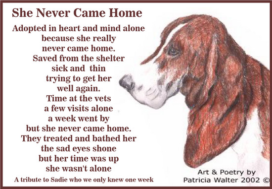 She Never Came Home Adopted in heart and mind alone because she really never came home. Saved from the shelter sick and thin trying to get her well again. Time at the vets a few visits alone a week went by but she never came home. they treated and bathed her the sad eyes shone but her time was up she wasn't alone. Poetry & Art by Patricia Walter 2002 ©