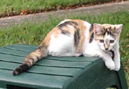 Pat's Cats 9