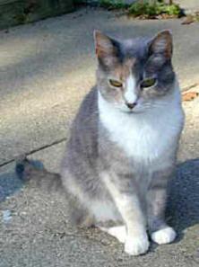 Pat's Cats 7