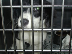 Benny in jail at the shelter as a puppy.
