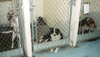 Molly in jail at the shelter as a stray.