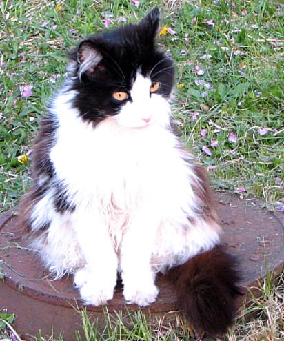 Daisy Patricia Walters Cat