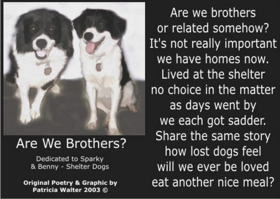 Are We Brothers? Are we brothers or related somehow? It's not really important we have homes now. Lived at the shelter no choice in the matter as days went by we each got sadder. Share the same story how lost dogs feel will we ever be loved eat another nice meal? Poetry & Art by Patricia Walter 2003 ©