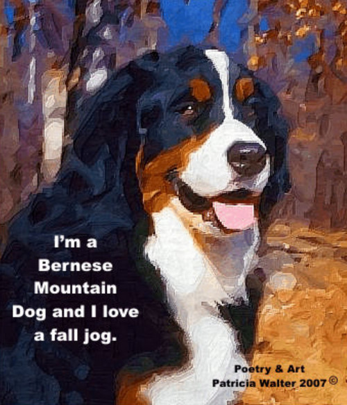Bernese Mountain Dog  I'm a Bernese Mountain Dog and I love a fall jog.  Poetry & Art by Patricia Walter 2007 ©