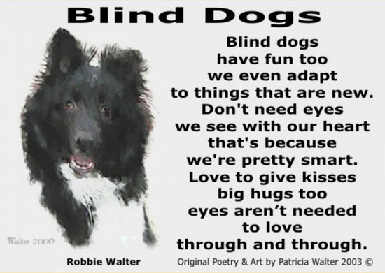 Blind Dogs Blind dogs have fun too we even adapt to things that are new. Don't need eyes we see with our heart that's because we're pretty smart. Love to give kisses big hugs too eyes aren't needed to love through and through. Poetry & Art by Patricia Walter 2003 ©
