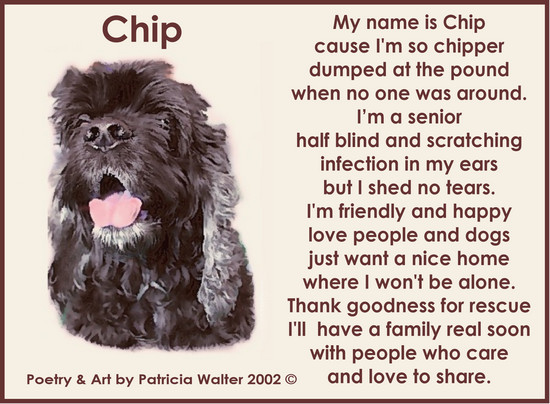 chip-2003 Chip My name is Chip cause I'm so chipper dumped at the pound when no on was around. I'm a senior half blind and scratching infection in my ears but I shed no tears. I'm friendly and happy love people and dogs just want a nice home where I won't be alone. Thank goodness for rescue I'll have a family real soon with people who care and love to share. Poetry & Art by Patricia Walter 2003 ©