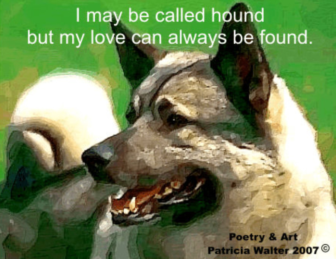 Elkhound I may be called hound, but my love can always be found. Poetry & Art by Patricia Walter 2007 ©