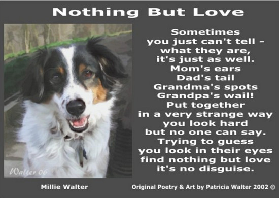 Nothing But Love Sometimes you just can't tell - what they are it's just as well. Mom's ears Dad's tail Grandma's spots Grandpa's wail! Put together in a very strange way you look hard but no one can say. Trying to guess you look in their eyes find nothing but love it's no disguise. Poetry & Art by Patricia Walter 2002 ©