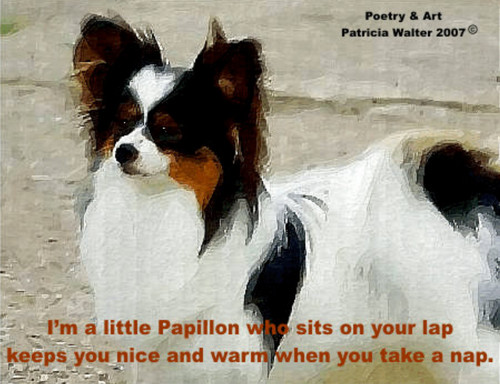 Papillon I'm a little Papillon who site on your lap keeps you nice and warm when you take a nap. Poetry & Art by Patricia Walter 2007 ©