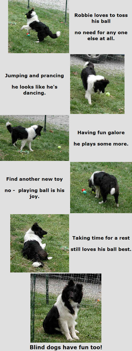 Blind Dogs Have Fun Too Robbie loves to toss his ball no need for anyone else at all. Jumping and prancing he looks like he's dancing. Having fun galore he plays some more. Find another new toy no - playing ball is his joy. Taking time for a rest still loves his ball the best. Dedicated to Robbie - Blind but no Handicap Poetry & Photos by Patricia Walter 2016 ©