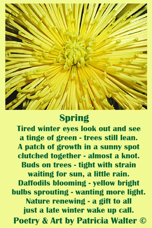Spring Tired winter eyes look out and see a tinge of green – trees still lean. A patch of growth in a sunny spot clutched together – almost a knot. Buds on trees – tight with strain waiting for sun, a little rain. Daffodils blooming – yellow bright bulbs sprouting – wanting more light. Nature renewing – a gift to all just a late winter wake up call. Poetry & Art by Patricia Walter 2002 ©