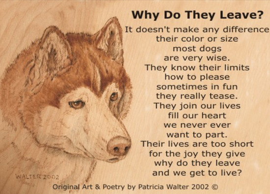 Why Do They Leave? It doesn't make any difference their color or size most dogs are very wise. They know their limits how to please, sometimes in fun they really tease. They join our lives, fill our heart we never ever want to part. Their lives are too short for the joy they give, why do they leave and we get to Live? Poetry & Art by Patricia Walter 2002 ©