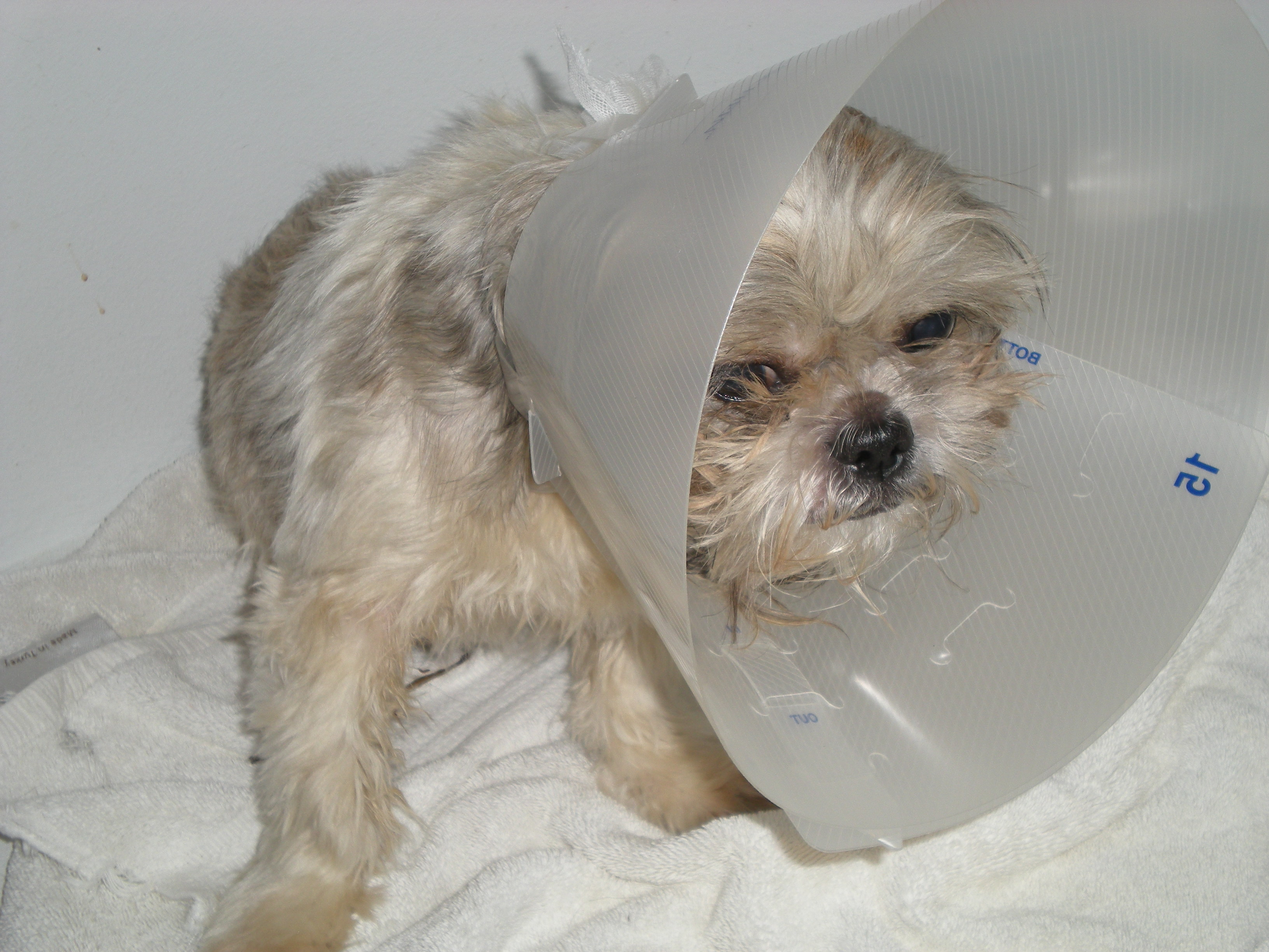 Poor Little Peanut at the vets. 2012