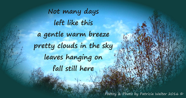 Fall Still Here Not many days left like this a gentle warm breeze pretty clouds in the sky leaves hanging on fall still here Poetry & Photo by Patricia Walter 2016 ©