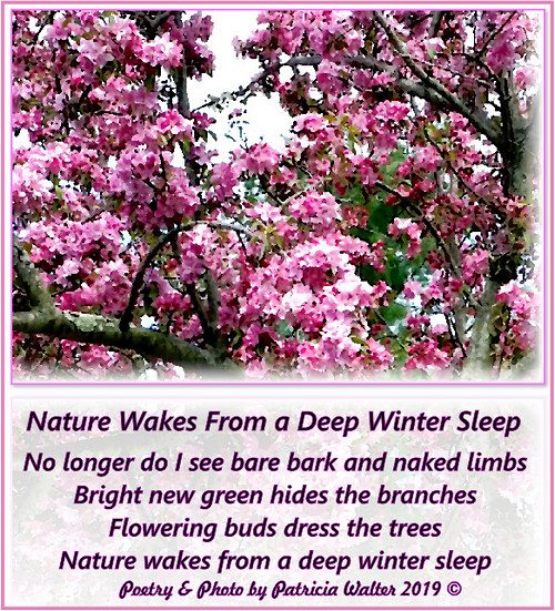 Nature Wakes From a Deep Winter Sleep