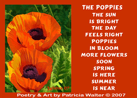 the Poppies poem by Patricia Walter